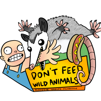 """A color cartoon illustration of a Virginia Opossum biting the forearm of a bald white man in overalls who is reaching for a hotdog in a bun that has become airborne. Below the cartoon is a banner with black letters on a yellow background that reads """"Don't Feed Wild Animals."""""""